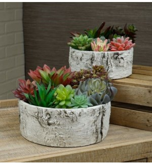Large Birch Planter Set