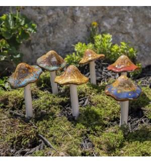 Med. Natural Mushroom Collection