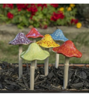 Med. Bright Mushroom Collection
