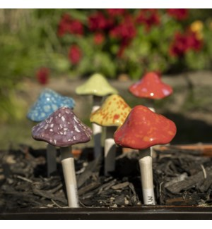 Small. Bright Mushroom Collection