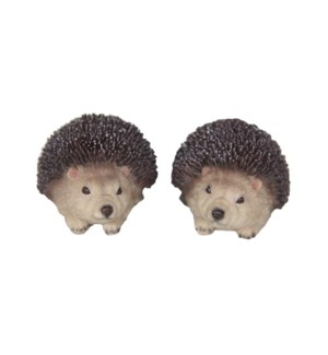 Hedgehog XS ass.