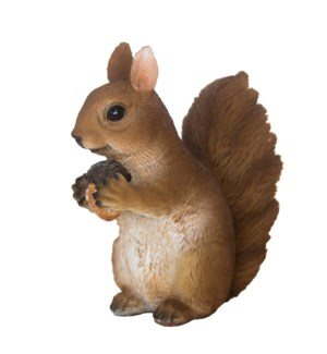 Squirrel sitting S