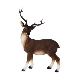Red deer standing M