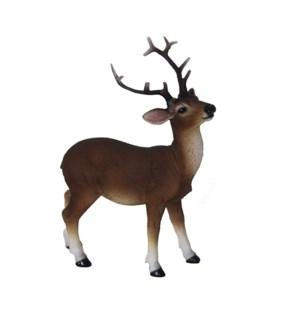 Red deer standing S
