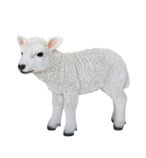Lamb standing S