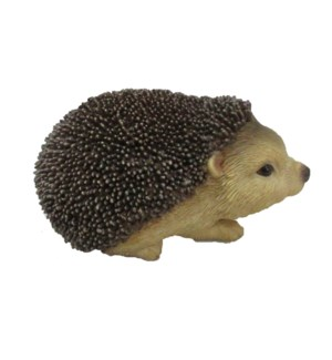 Hedgehog S
