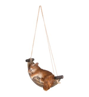 Squirrel in hammock
