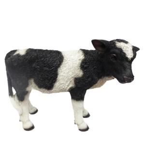 Calf standing S