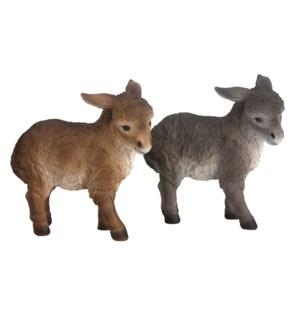 Donkey standing ass.