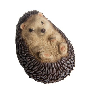 Hedgehog on back lying