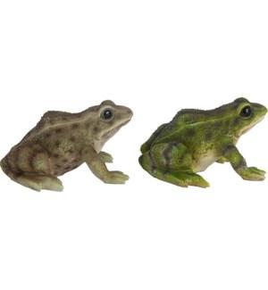 Frog ass.