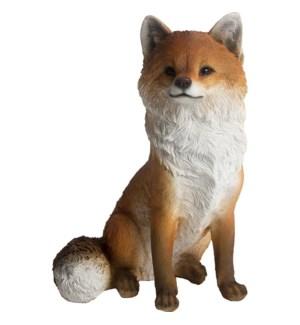 """Fox sitting, LC"""