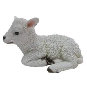 Lamb lying