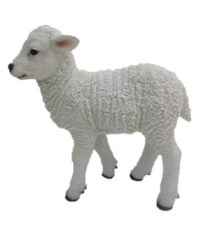 Lamb standing M