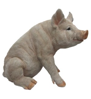 Pig sitting