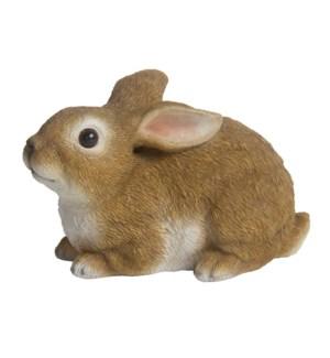 Hare lying M
