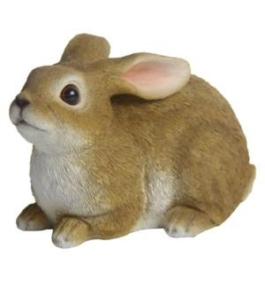 Hare lying L