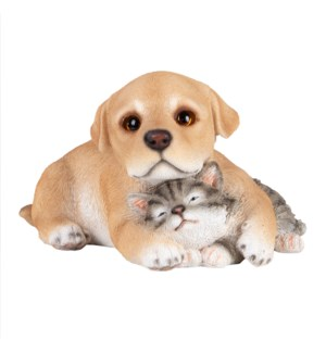 Pup with kitten