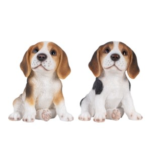 Beagle pup ass.
