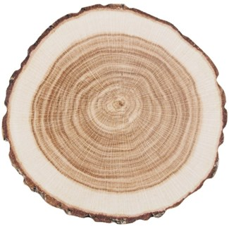 Coasters paper tree trunk set/10 - 3.94x3.94x0.2