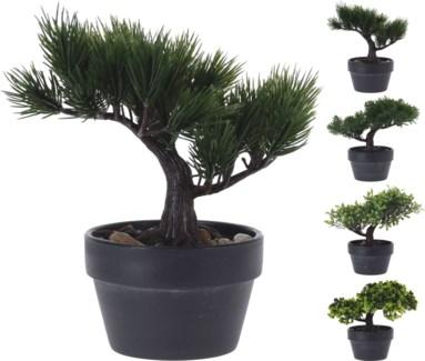 317002710 Bonsai Tree