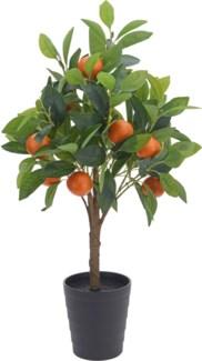 318000500 - Orange Tree In Pot 27.5 in. High