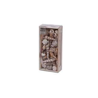 D22100750-Asst Shells In Crate 8.6x4x2 in