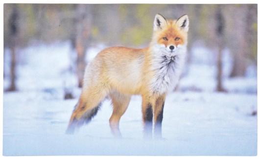 Doormat fox. Recycled Crumb Rubber, non woven polyester. 76,0x45,5x0,4cm. oq/6,mc/6 Pg.35, 123