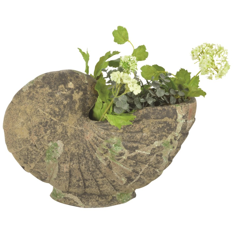 """AC planter shell moss, Remove, LC, OS"""