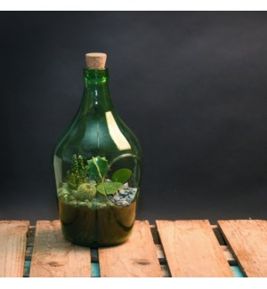 Open terrarium bottle 3 litre - (6.3x6.2x11.9 inch)