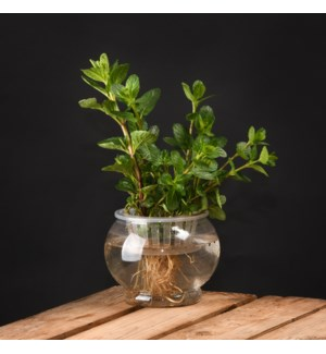 Hydroponic flower pot M