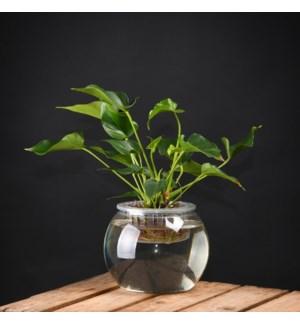 Hydroponic flower pot L