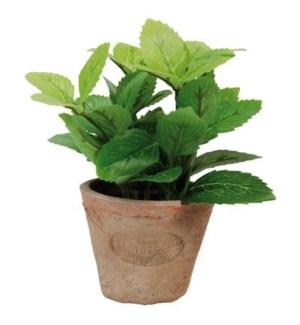 Mint in AT pot S. Terra cotta