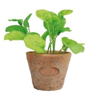 Basil in AT pot S. Terra cotta