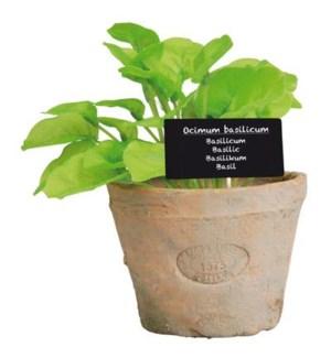 Basil in AT pot L. Terra cotta