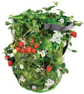 Strawberry/Herb planter. PP, polyester. 33,5x33,5x44,5cm.