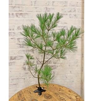 Demio Branch Holder, Black, 3.2x3.2x1.5 inch