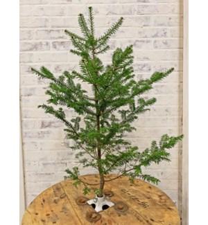 Demio Branch Holder, Antique White, 3.2x3.2x1.5 inch