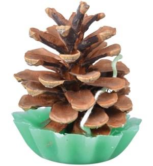 Pine cone fire starters. DNO