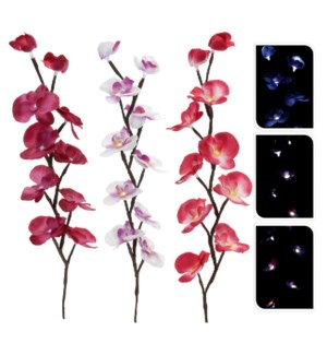 """""""AXF200400. Led Orchid , FD, OS"""""""