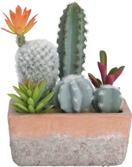 319000120 Cacti in Terracotta Pot, Rectangle 5.9x5.9x7.9 in.