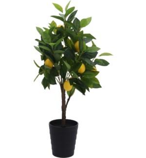 Lemon Tree In Pot 70cm.  180X180X770mm