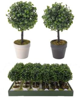317002050 Boxus Pot Plant Assorted Color Last Chance!