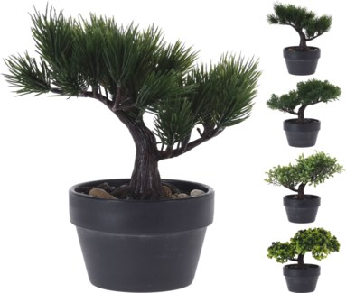 317002710 Bonsai Tree Last Chance!