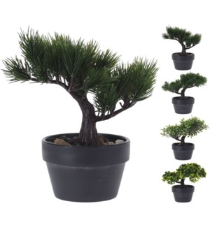 317002710 Bonsai Tree Last Chance!