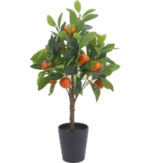 318000500 - Orange Tree In Pot 27.5 in. High