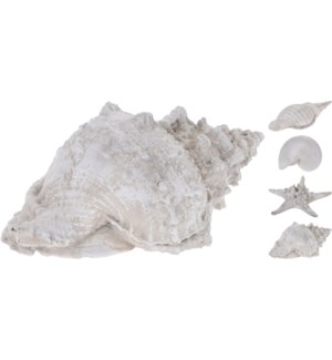 """252120310-Beachcomber Shells,"""