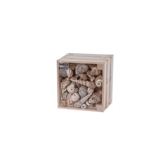 D22100740-Asst Shells In Crate 5x3 in
