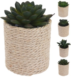 """""""317353850 PLANT IN POT WITH ROPE, 8X8X14CM. 4 AS"""""""