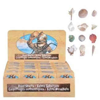 Shell in box ass. Real shells. 6,0x6,0x4,0cm. oq/32,mc/144 Pg.105